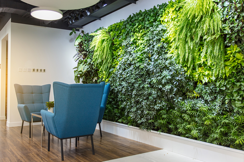 Green wall within office.